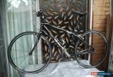 """Classic GIANT perigee Hybrid Road Bike 17"""" Composite Frame 9 x 3 Speed 622c Wheels for Sale"""