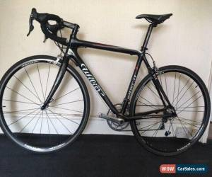 Classic Wilier carbon Road Racing Bike Campagnolo Centaur Medium frame 54cm for Sale