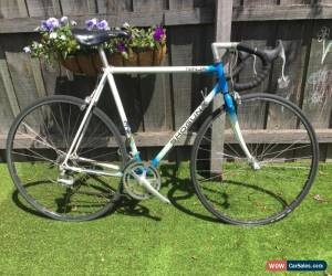 Classic Shogun Ninja Road bike - Steel frame for Sale