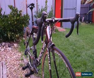 Classic Focus Cayo Carbon Road Bike Shimano Ultegra Di2 Mavic Wheels  for Sale